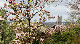 blossom-cathedral-270